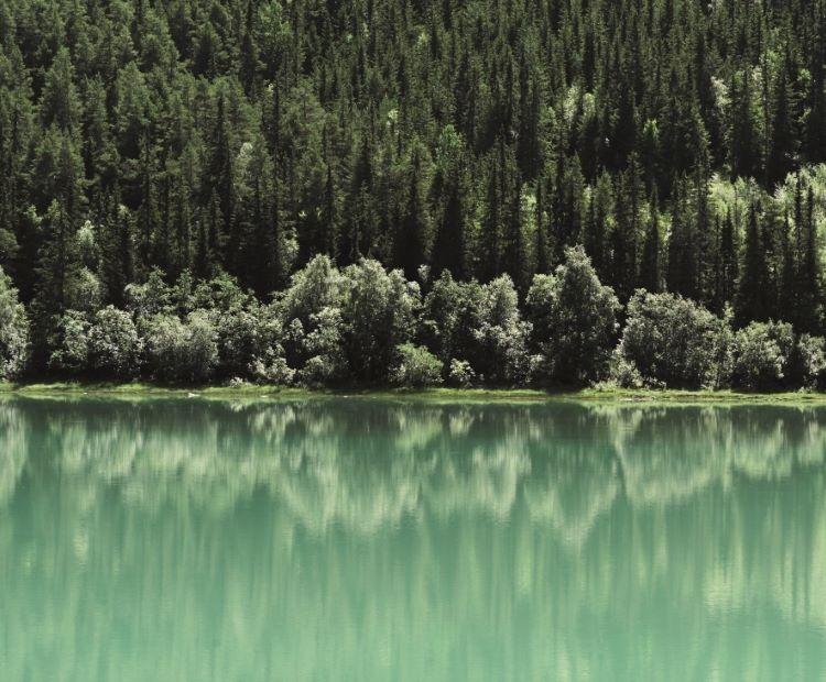Grønne trær og vann